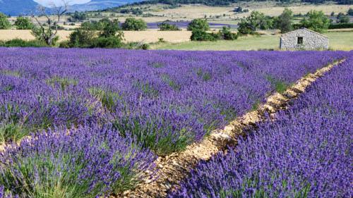 film Provence - L'art des contrastes